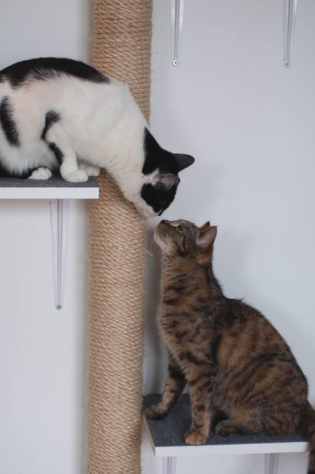 dom tymczasowy dla kotów