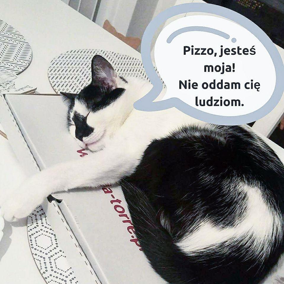 dom tymczasowy koty