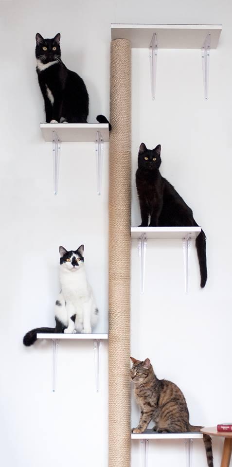 koty-i-inne-psoty